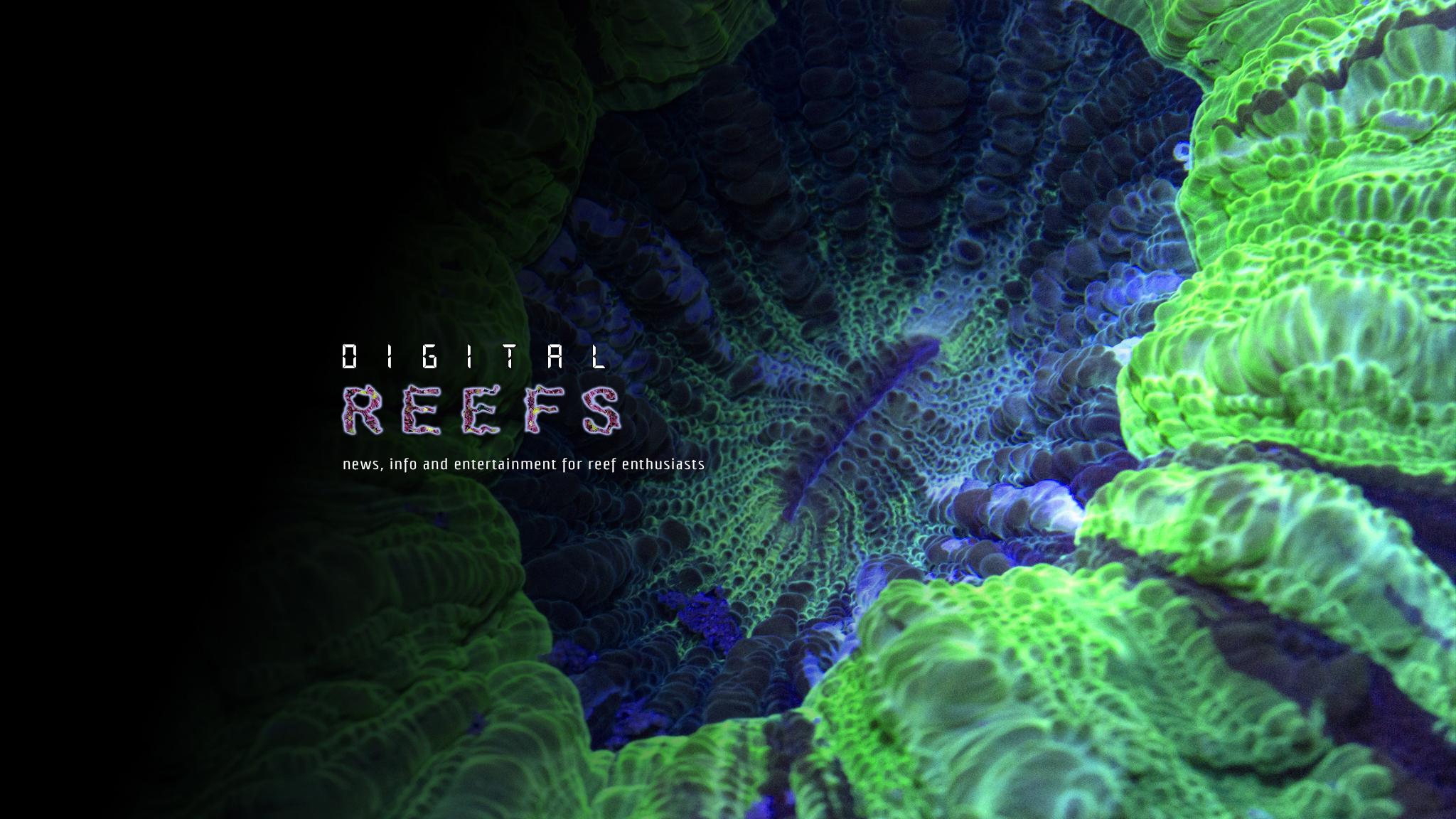 Digital-Reefs Relaunch Underway